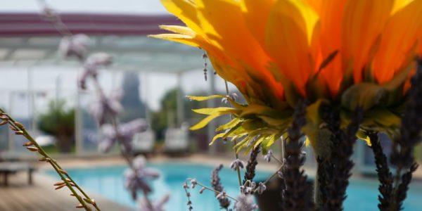 piscine2reduite